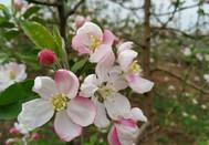 我的家乡春暖花开正当时