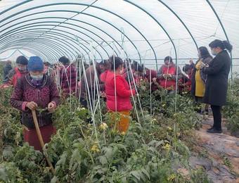 市民尝了鲜 农民赚了钱——观光农业让农闲变农忙