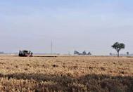 麦收季节农村图片