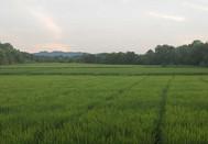 傍晚的田间景色